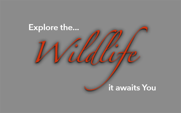 Explore the Wildlife, it awaits you at Nonacho Lake Fishing Camp